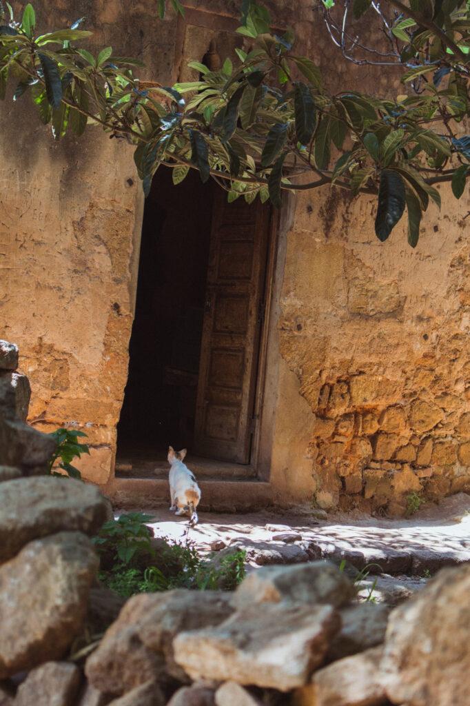 Eine Katze vor einer Tür in Rabat, Marokko