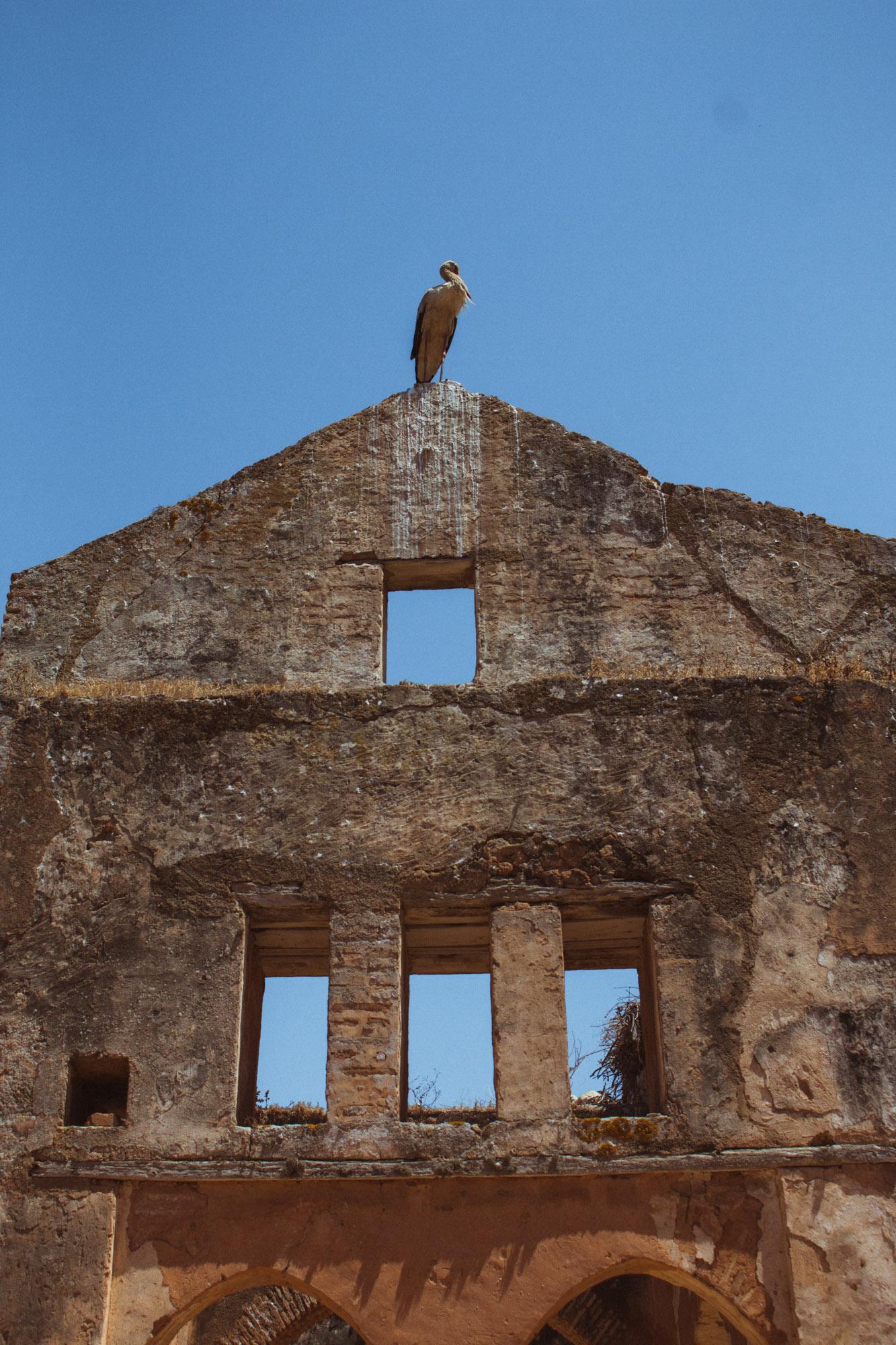 Ein Storch in der Chellah in Rabat, Marokko