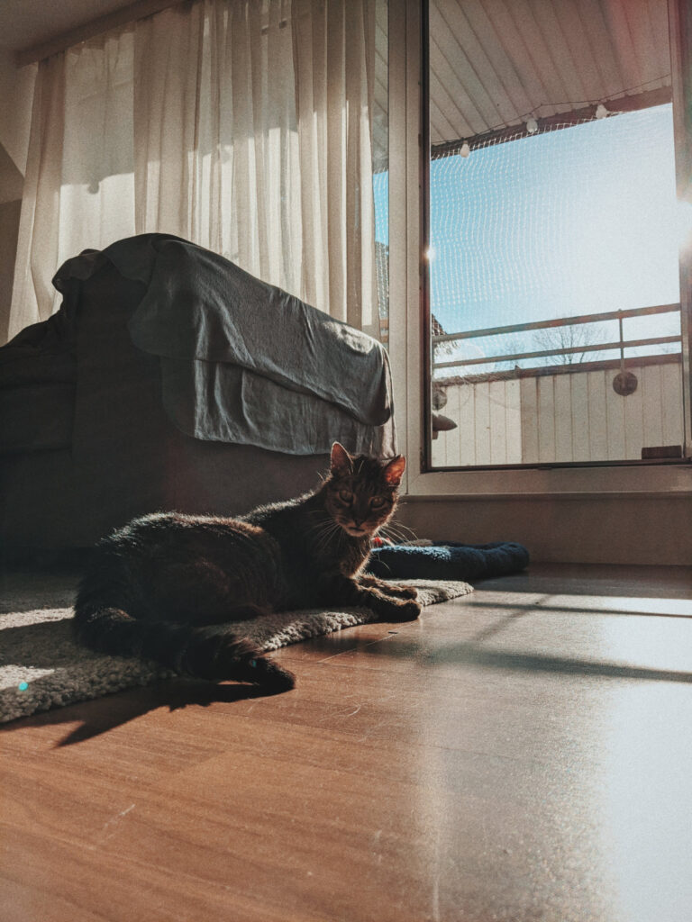 Alte getigerte Katze aus dem hamburger Tierheim Süderstraße